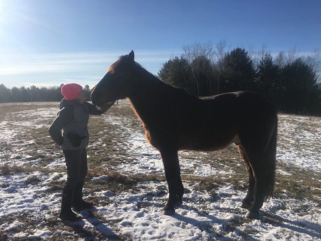 Bodyke - The Ephphatha Community Horse