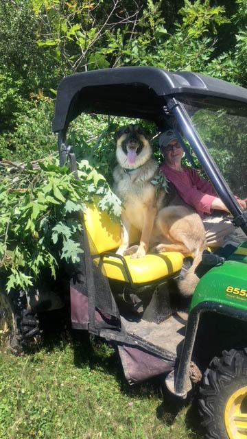 The Farm Dog, Pip