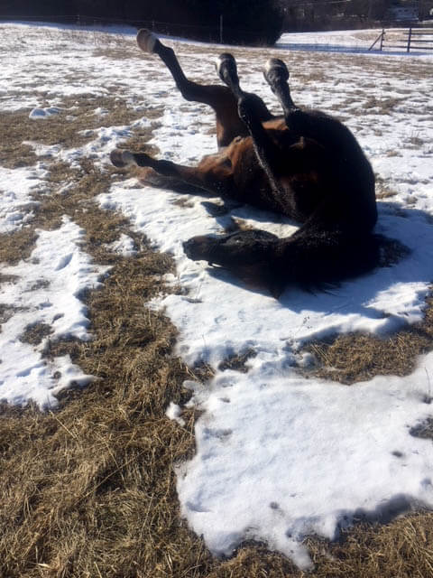 a brown horse rolls in the snow