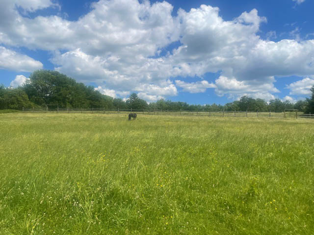 A horse in the distance in a beautiful green pasture under a blue sky